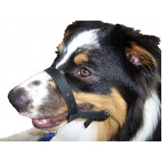 Dog Halter